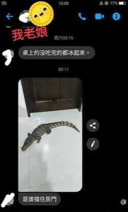 妹子养鳄鱼当宠物!更大的鳄鱼1米5长,这天它跑进了哥哥房间