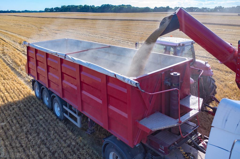 这个地区的小麦被抢了