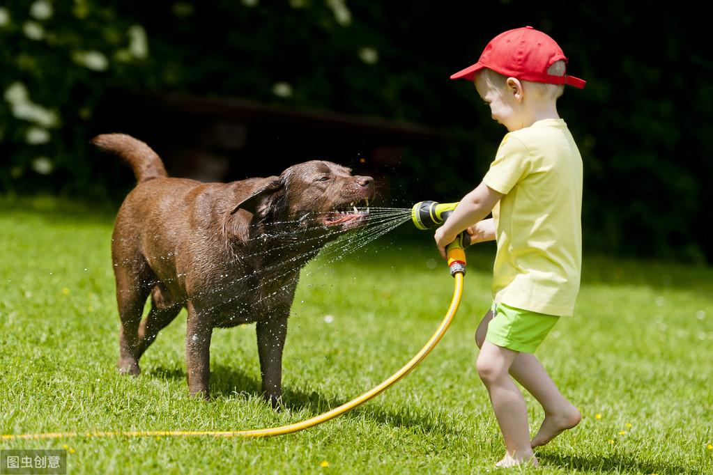 这4种表现,说明狗狗把自己当人了!你家爱犬有吗?