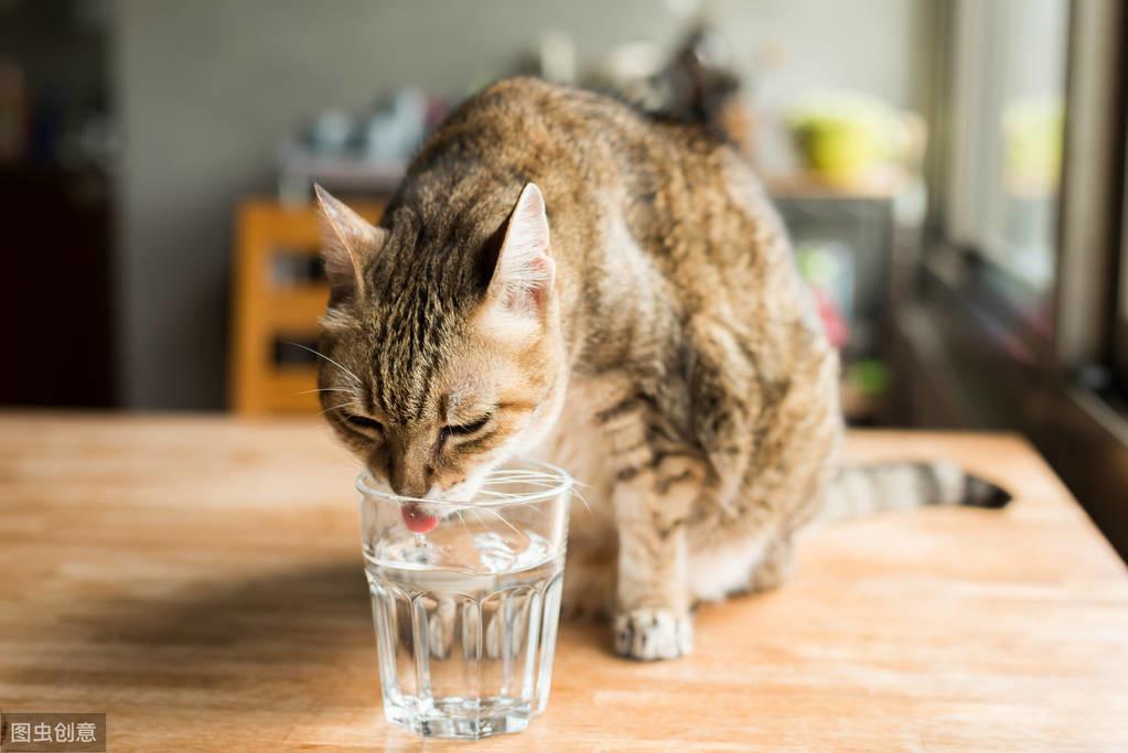 貓喝不夠水,容易得尿結石,那麽如何判斷,貓是否喝夠了水?