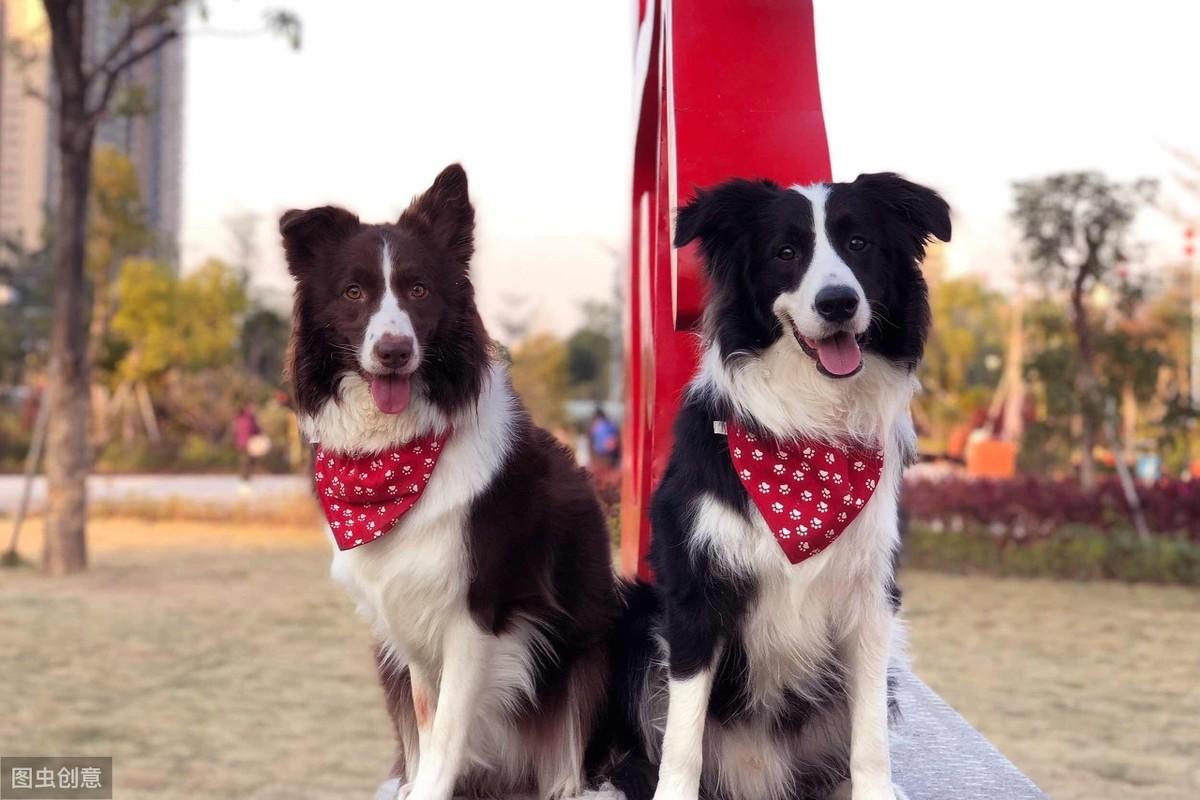 在中国,这10个品种的狗狗最受欢迎,第一名你肯定猜得到