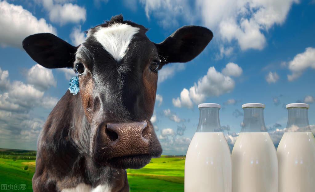 """牛原來吃的是草,擠出的是奶,商人為了利益卻在背後""""挖洞"""""""