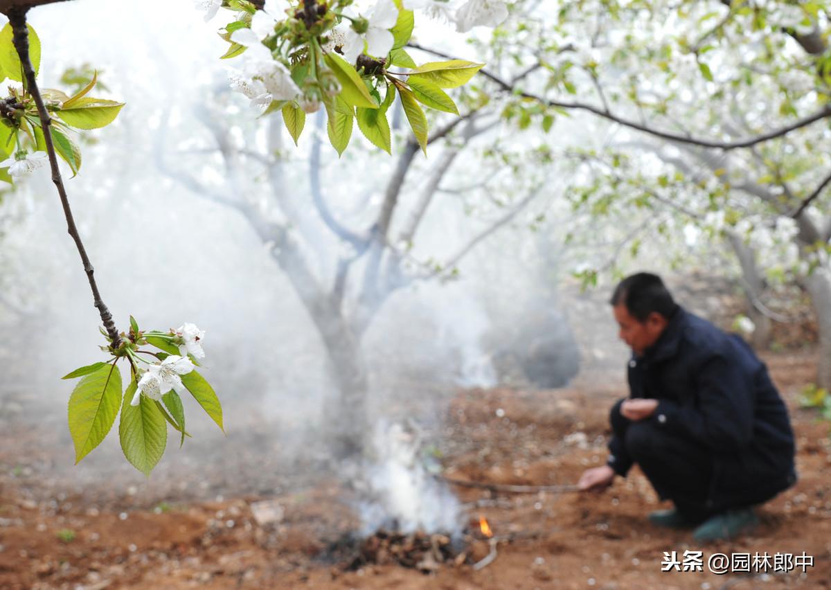 暖冬情况下,园林病虫害防治 疾病防治 第7张