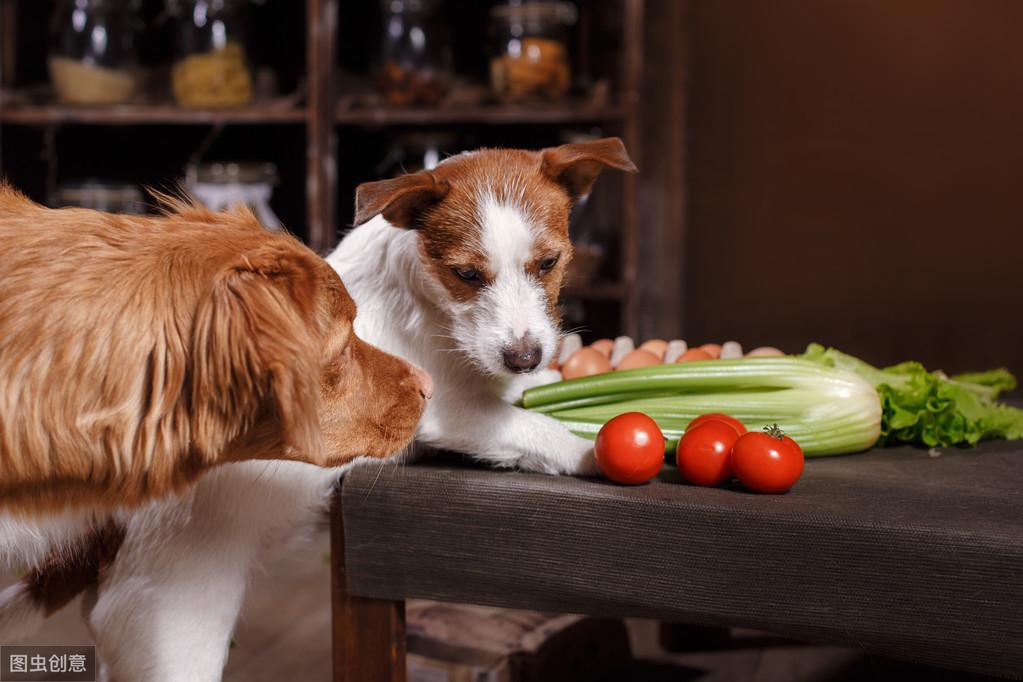 切记!狗狗不能吃这几种食物,严重会致死