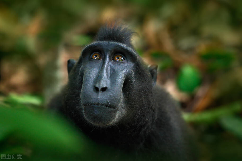 国知酒探索酒历史(一)猿猴发现了酒