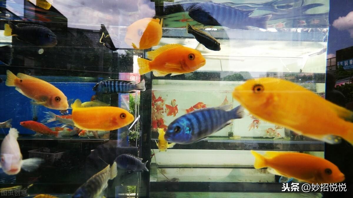 鱼缸如何正确养好鱼,学会这5点小技巧,让您的家里面充满温馨 养好鱼小技巧 第1张