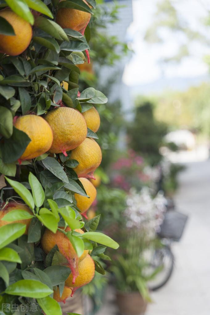 橘子皮,橘子籽,橘子葉,橘瓣絡竟然都是中藥