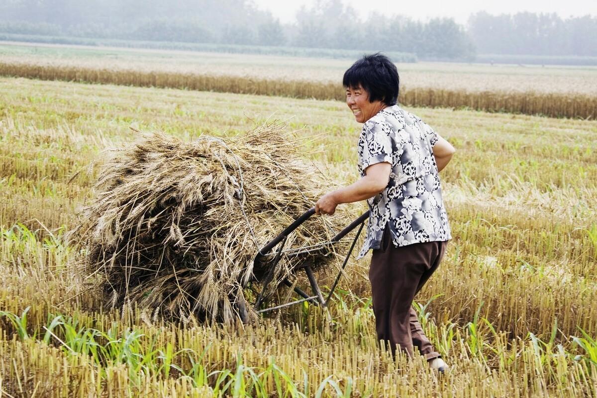 检测出检疫性有害生物!中国海关:将严查澳洲进口小麦