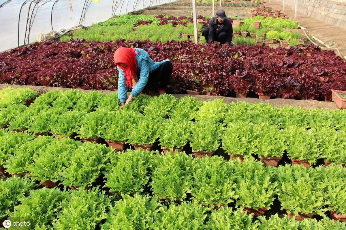 种植蔬菜怎样才能赚钱?