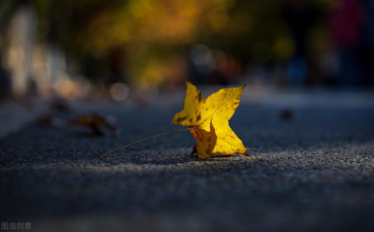 愿作一片秋叶
