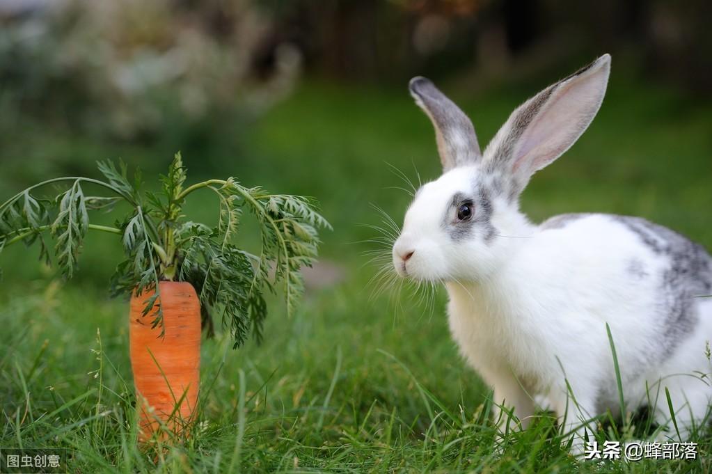 家養兔子比野生兔子更容易死亡的4大原因,知道了,養兔更輕松