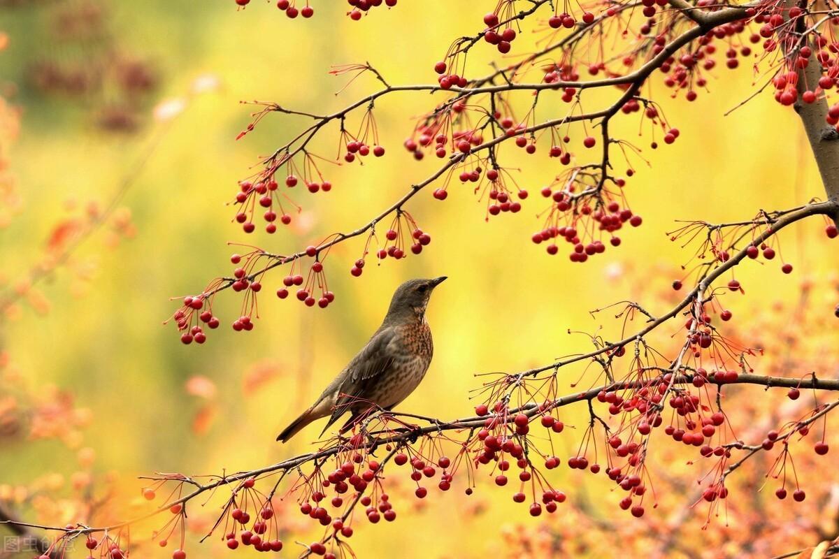 初秋,养生黄金季,养好二处,做好三勤,坚持四不,秋冬少生病