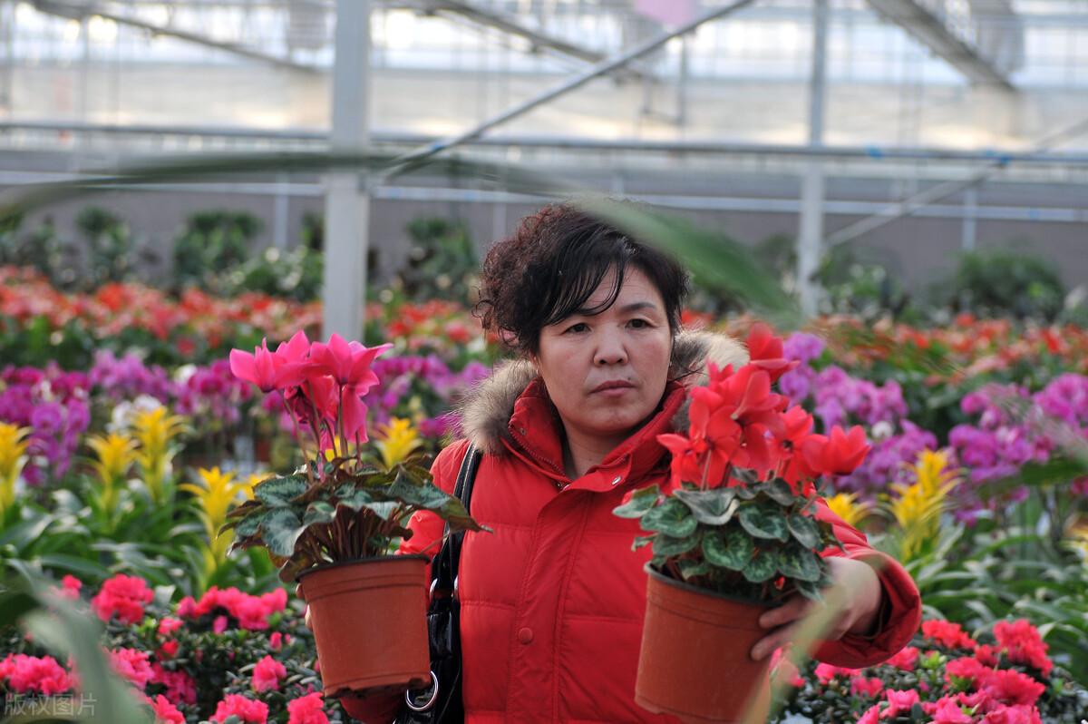 国内外花卉专业种植温室大棚的区别有哪些?