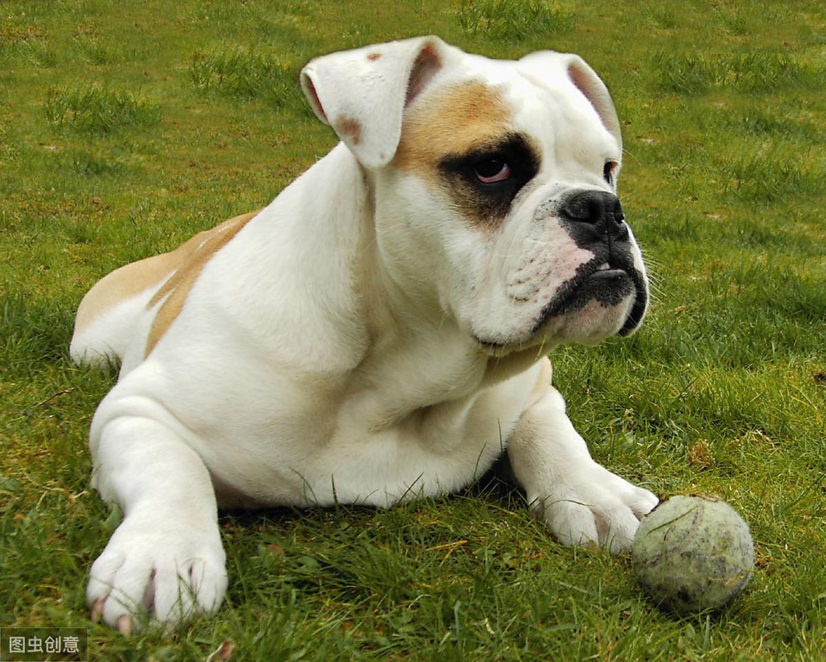 """公认最""""贪吃""""的五种狗狗,网友:为了一口吃的,连我都不认"""
