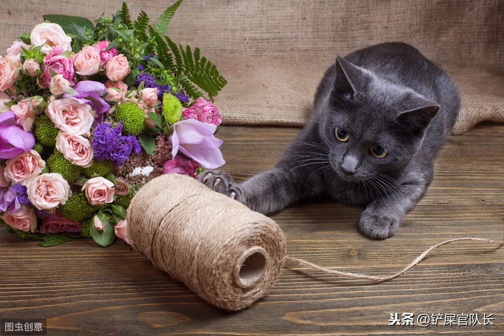 貓奴們請注意,如果有這些征兆,貓咪就是發情了