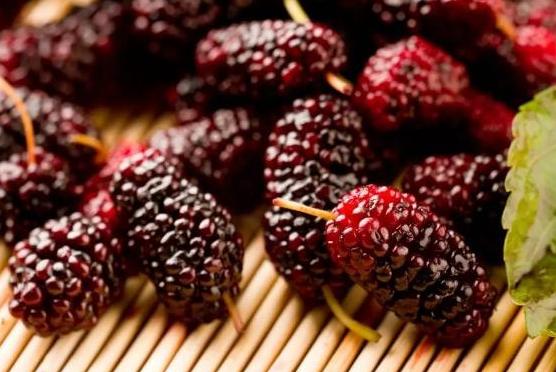 食疗养生:既是水果又是药,《本草纲目》记载,常吃它人耳聪目明 桑葚枸杞子粥 第1张