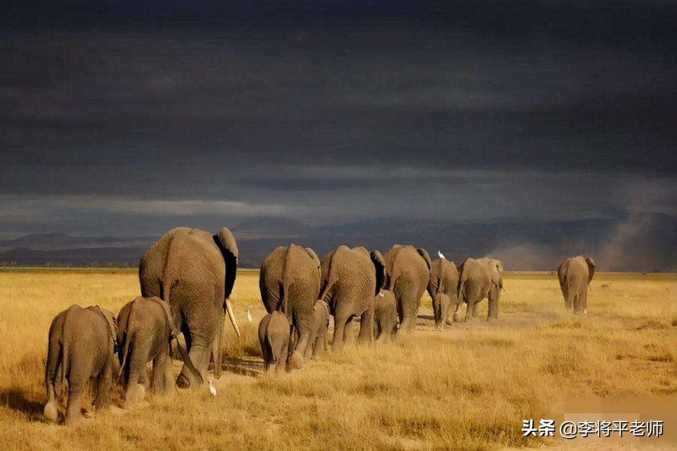 云南大象为何集体迁徙,这背后也许是人和大象的双重无奈