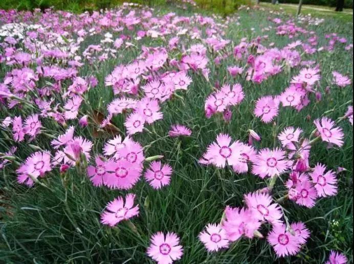 花境植物配置,如何选择适合的园艺植物?