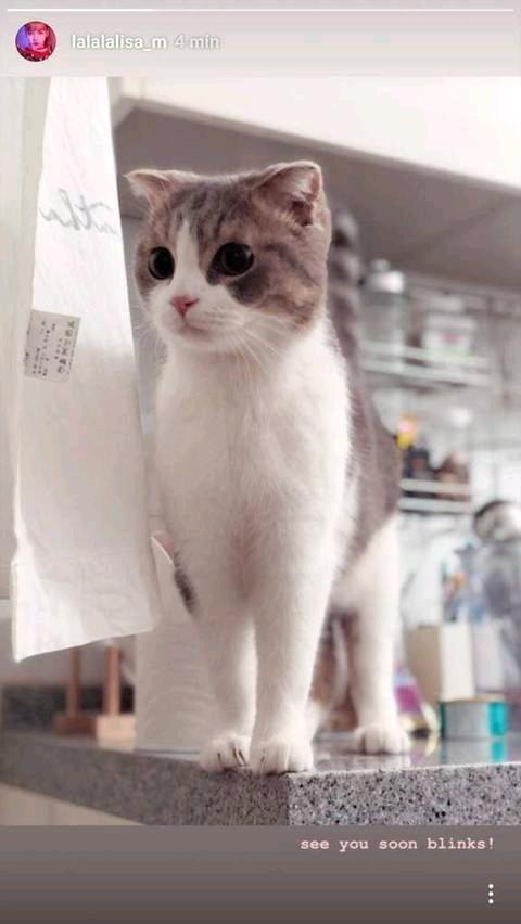 因为金希澈不推荐领养遗弃犬发言,LISA花钱买的动物也成热议对象