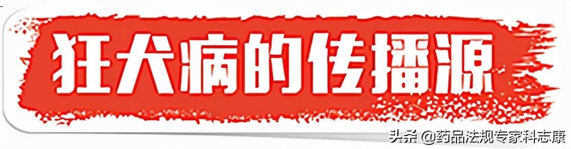 9.28 世界狂犬病日