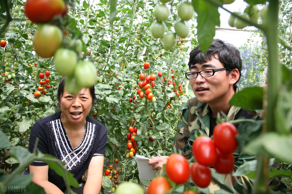 种植为什么使用温室大棚?温室大棚种植有哪些优点