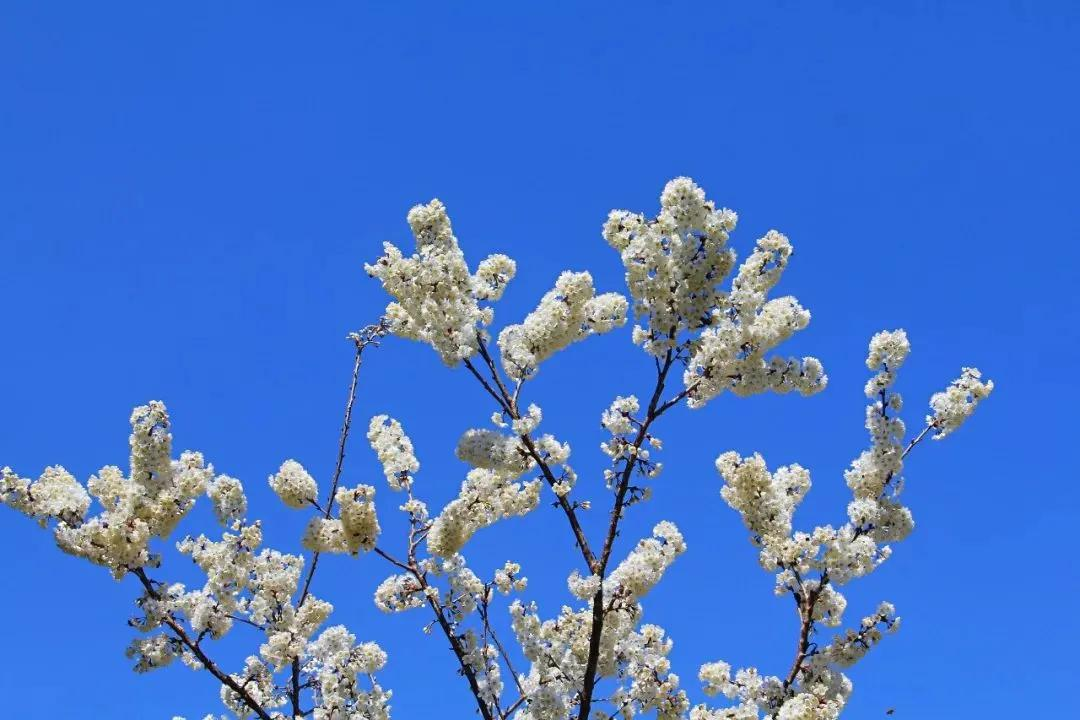 春晓德阳 | 满眼春意,赏花!搞快!