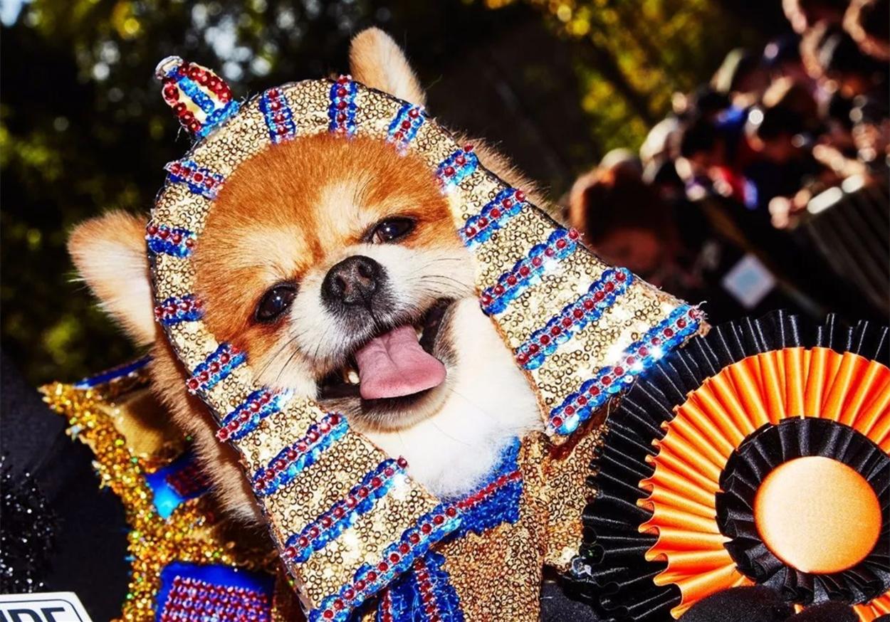 众多狗狗参与纽约万圣节派对,铲屎官也混在其中,各式造型看花眼