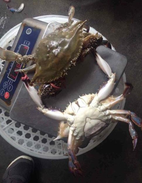 北京曝光:鲤鱼、梭子蟹全被查出大问题,大家实在受不了