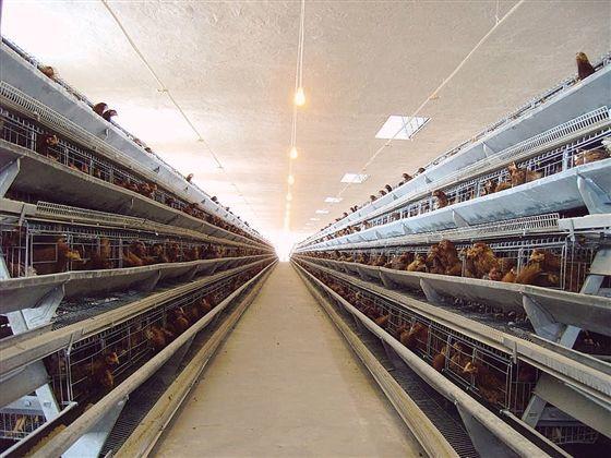 河北:养鸡场采暖之路的转变,空气源热泵采暖成常态