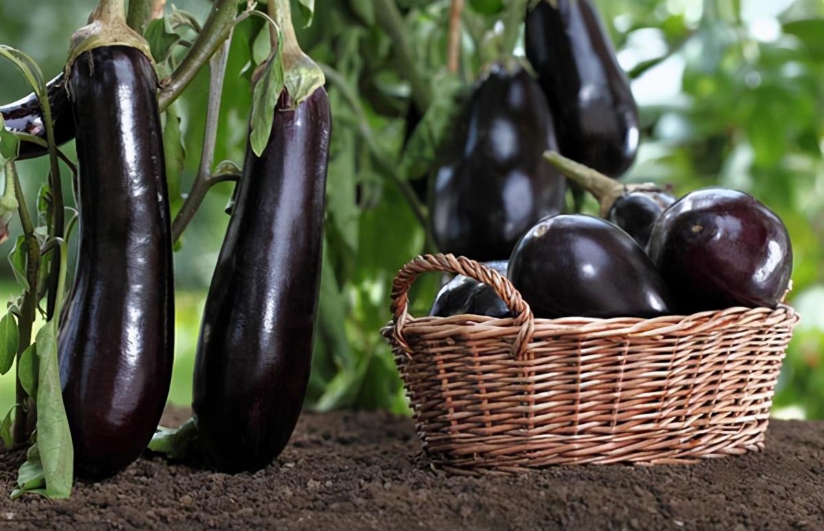 高血壓清淡飲食也有坑,亂吃蔬菜血壓真的會飆升