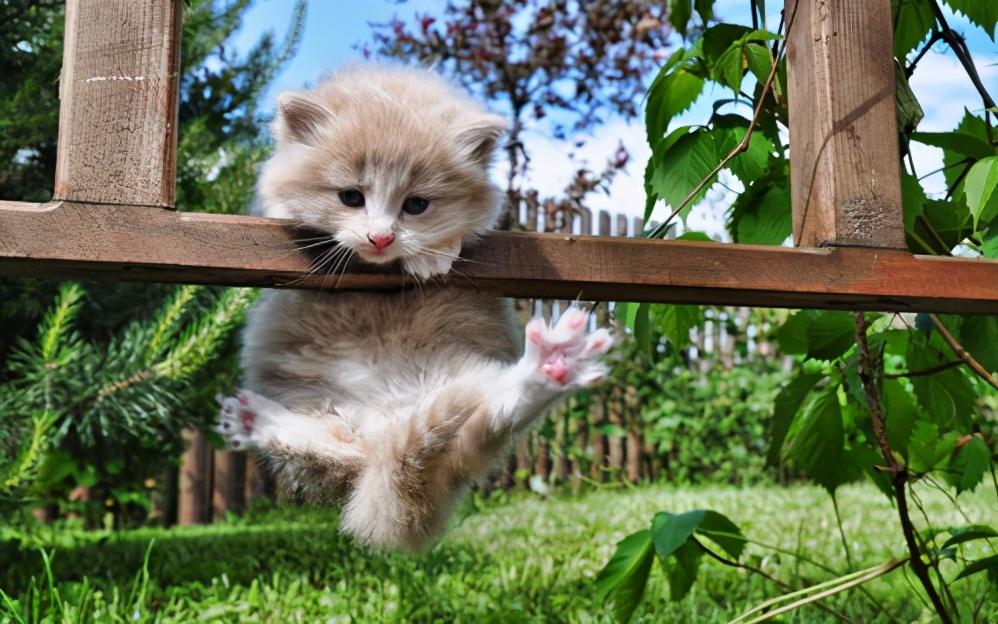 """猫咪过得""""幸福""""的6个表现,全中了,说明你是个好的铲屎官"""