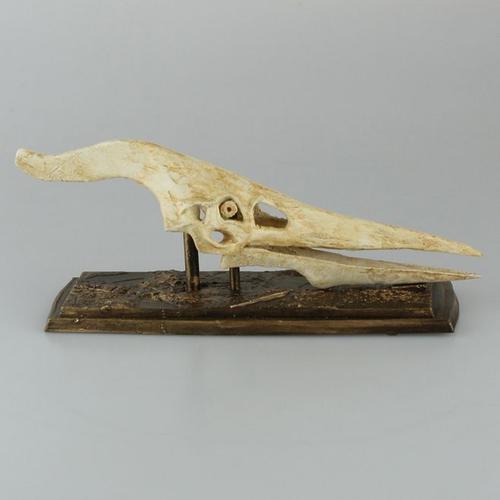 翼龙家族:天空巨兽,弹射起飞的生物战机