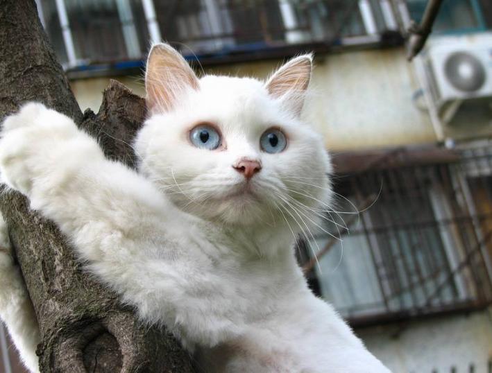 """猫咪天生""""害怕""""的7件事,你家猫占几个?"""