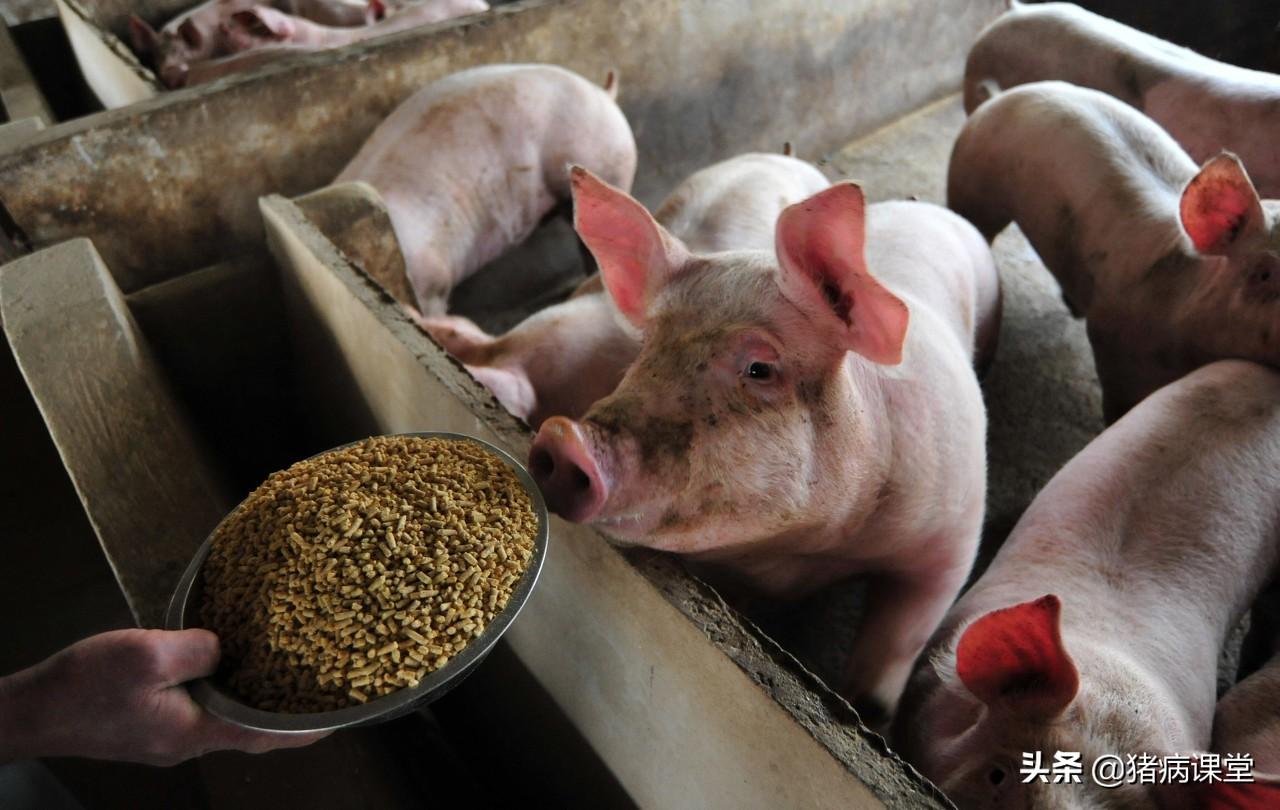 「猪场技术」猪几种常见疾病预防与治疗浅谈