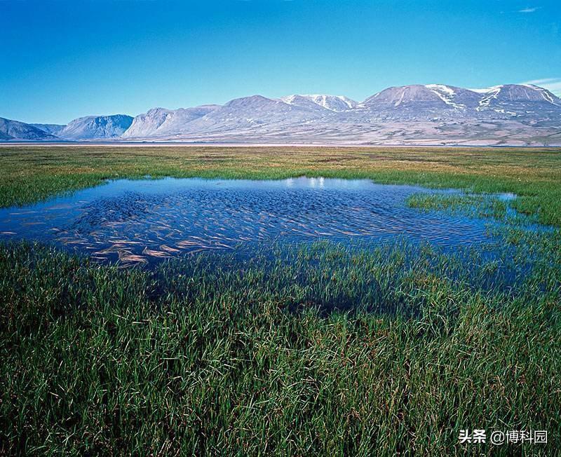 北极变暖速度比任何地方都要快!如何预测北极湿地的未来?