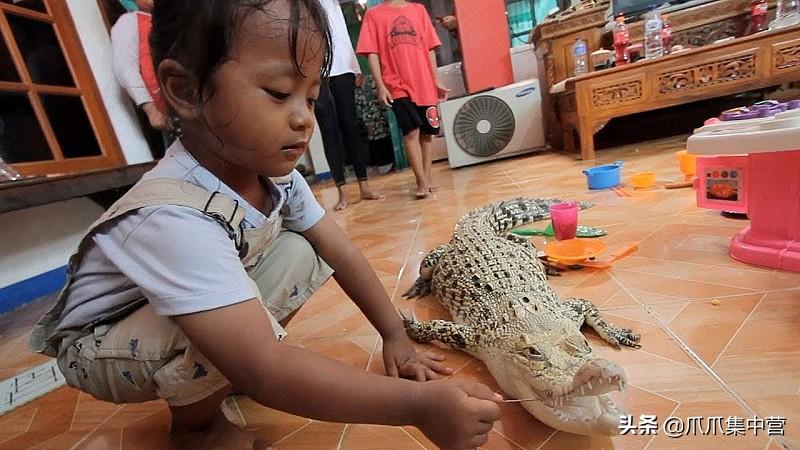 10块钱买鳄鱼当宠物,20年长到200公斤,主人夸它乖巧驯服