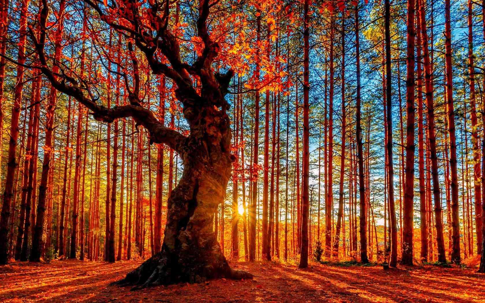 秋季摄影的20个秘诀,拍摄时请对照使用,让您的作品脱颖而出
