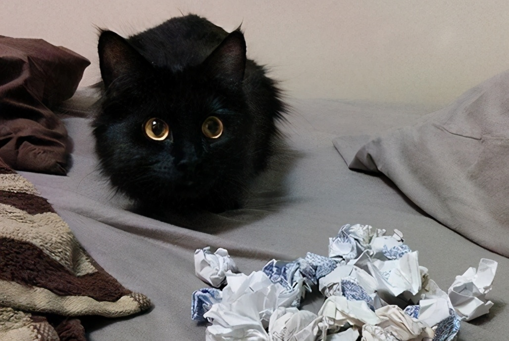 有这6种表现的猫咪,都缺乏安全感,看看你家喵是吗?