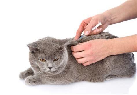 辟谣:狂犬疫苗和猫三联一样重要,所有猫咪都应该打狂犬疫苗