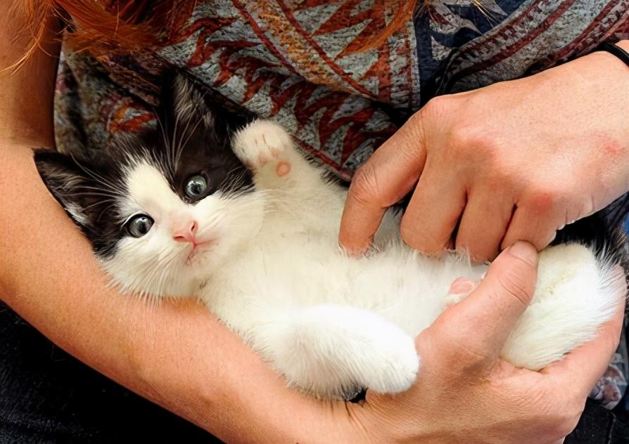 猫咪对你感兴趣,才有这些行为,中了就偷着乐吧