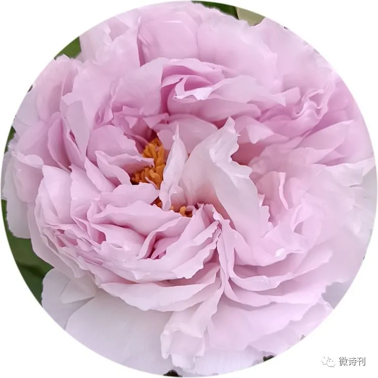 新诗推荐:著名诗人安娟英诗歌专辑