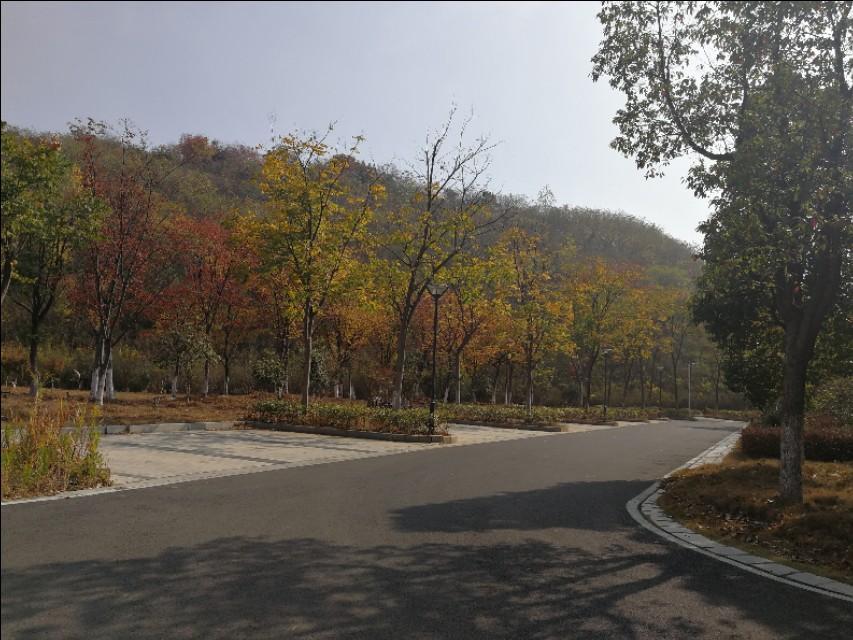 这里不仅有大树、高楼,更有大师——带你参观南京大学仙林校区