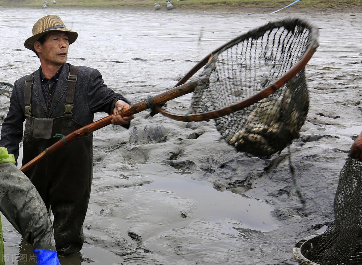 鱼价走跌,毛鸡迟迟不涨,羊价、蛋价飘红,发生了啥?9月要涨?
