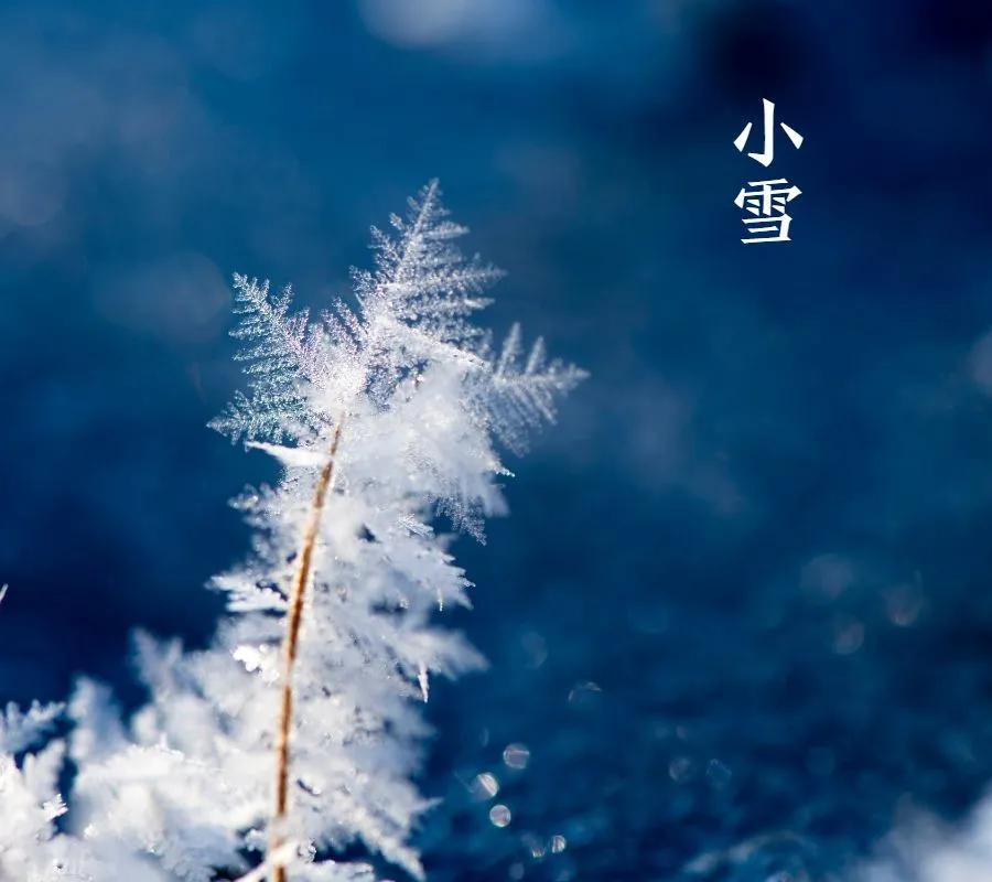 今日小雪丨小雪忽至,万物冬藏,愿君多珍重