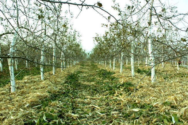 品质是保障生命健康核心,土壤营养平衡供应能力是实现高品质基础