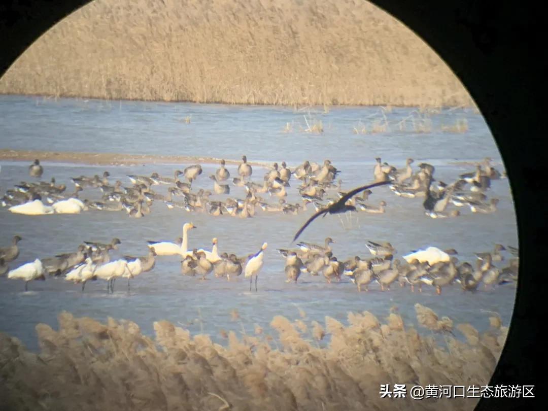 【黄河口生态旅游区】探寻冬日童话