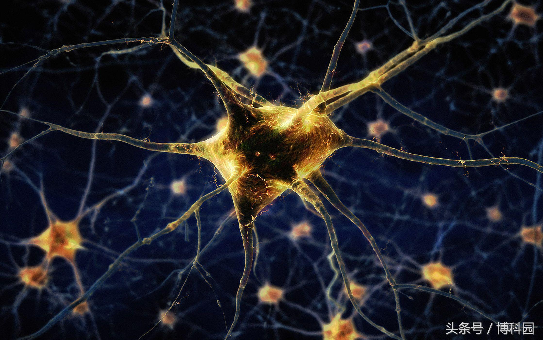 好事情?最新研究表明:血细胞可以转化为脑细胞
