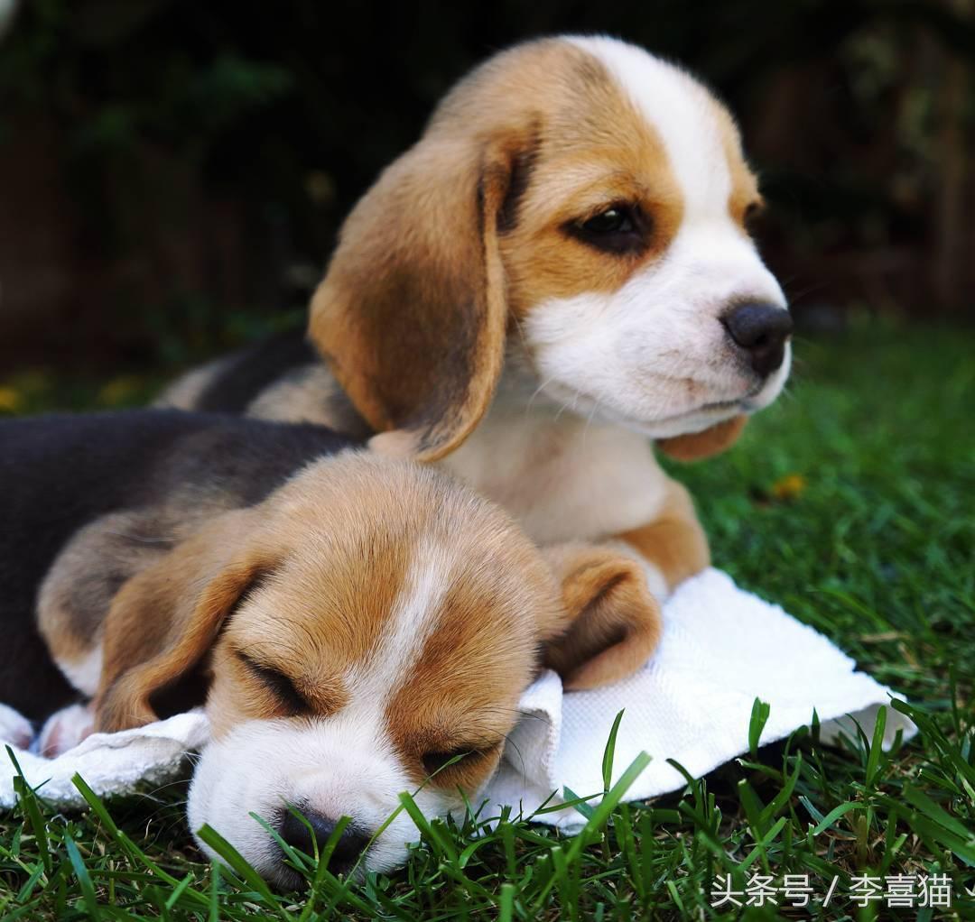 除了貓咪和狗狗還有這麽多毛絨絨的寵物,可愛的讓人無法抵抗