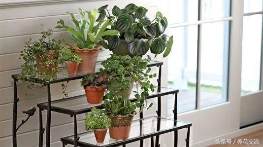 实用的11个养花技巧,让你的室内盆栽植物生长健康旺盛 养花妙招 第4张