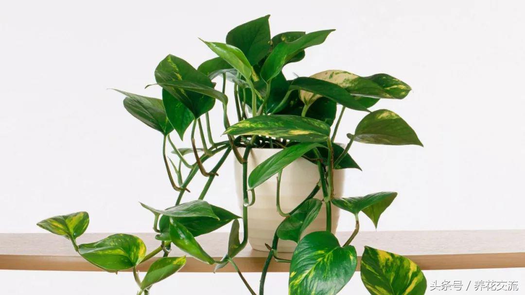 实用的11个养花技巧,让你的室内盆栽植物生长健康旺盛 养花妙招 第2张
